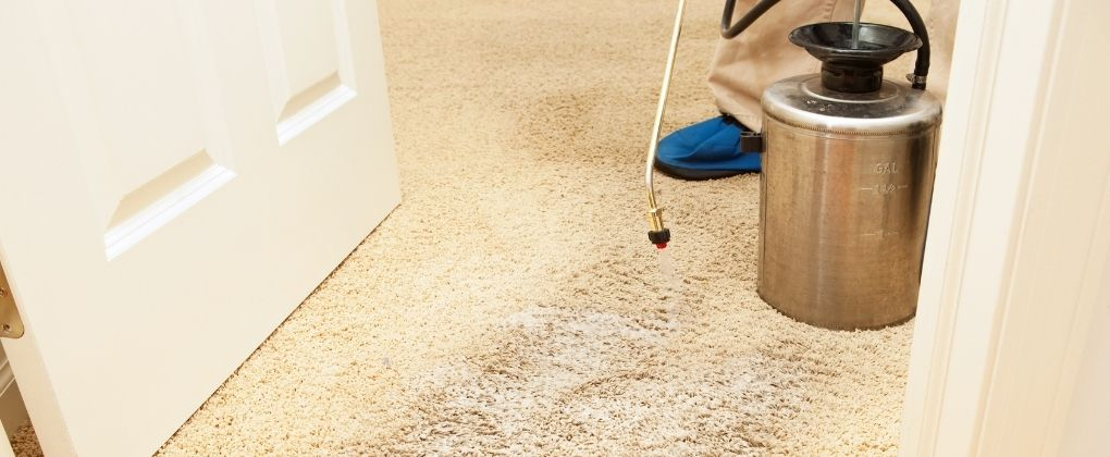 Can You Use a Paint Sprayer for Stain